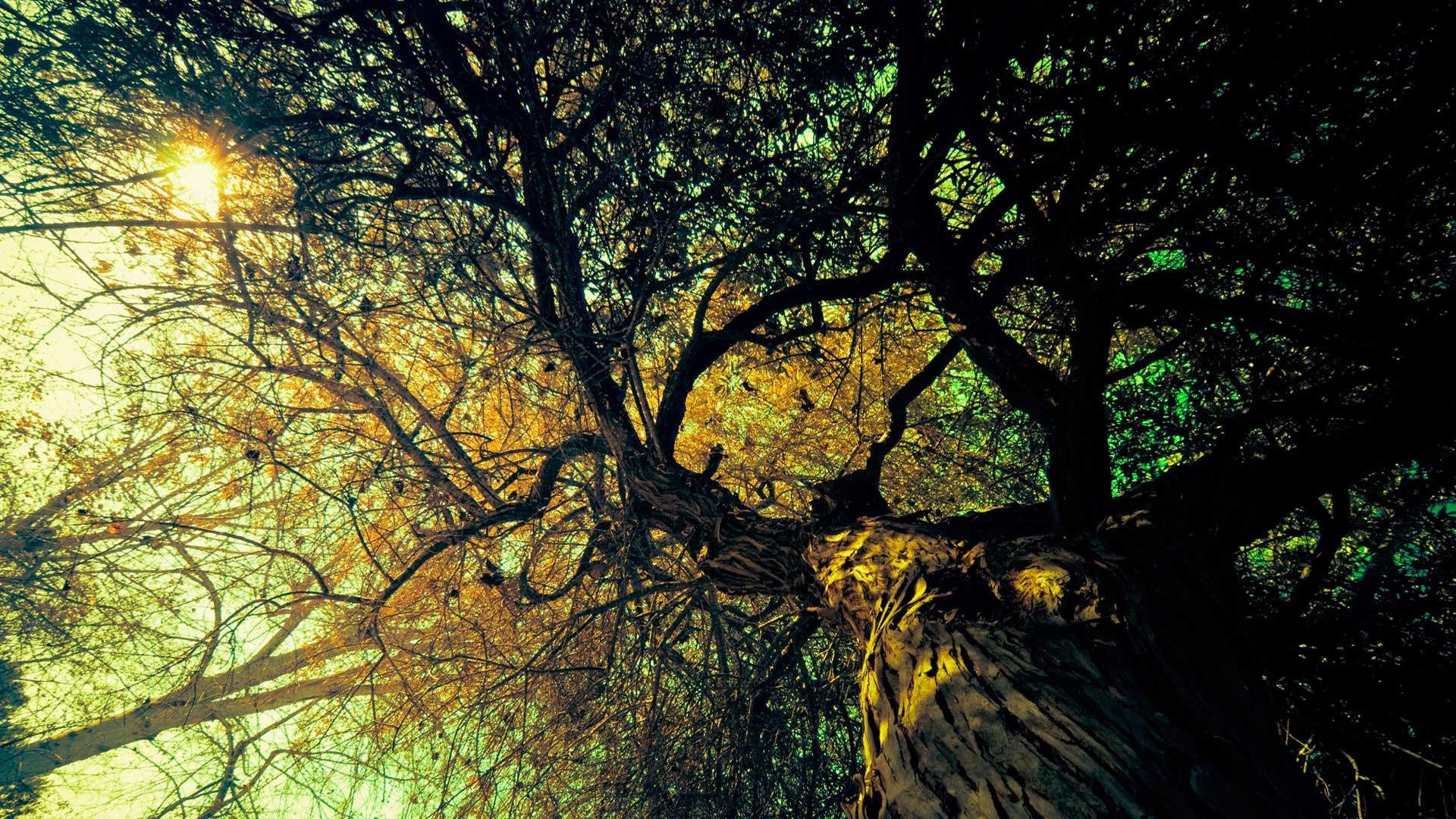 В столицеРФ бабушку придавило деревом: она получила перелом тазобедренной кости