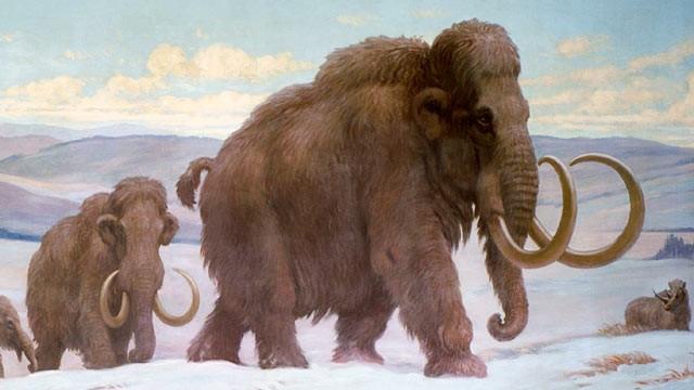 Ученые отыскали новейшую причину вымирания мамонтов