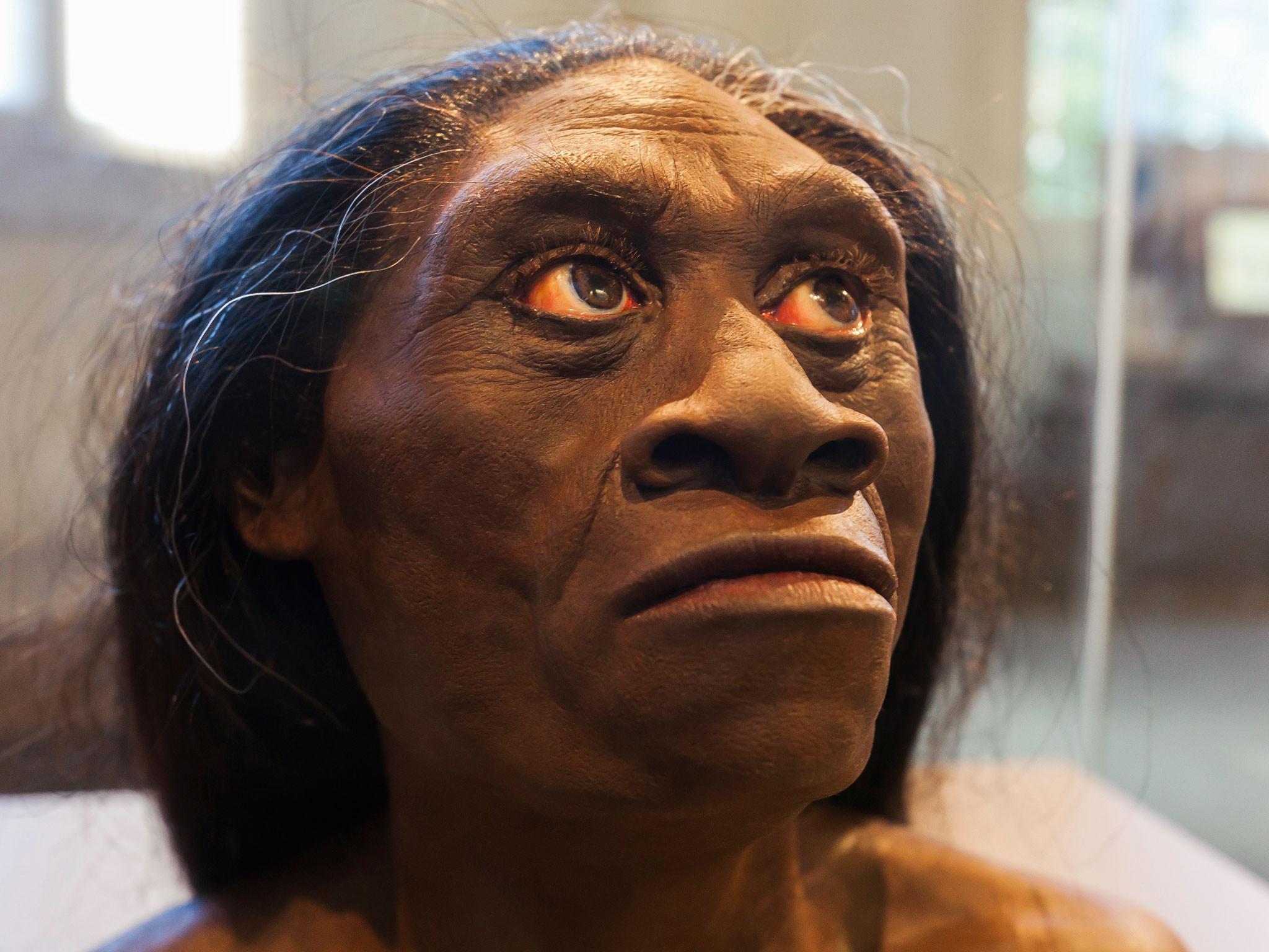 Ученые: «Хоббиты» сострова Флорес неявляются сородичами человека