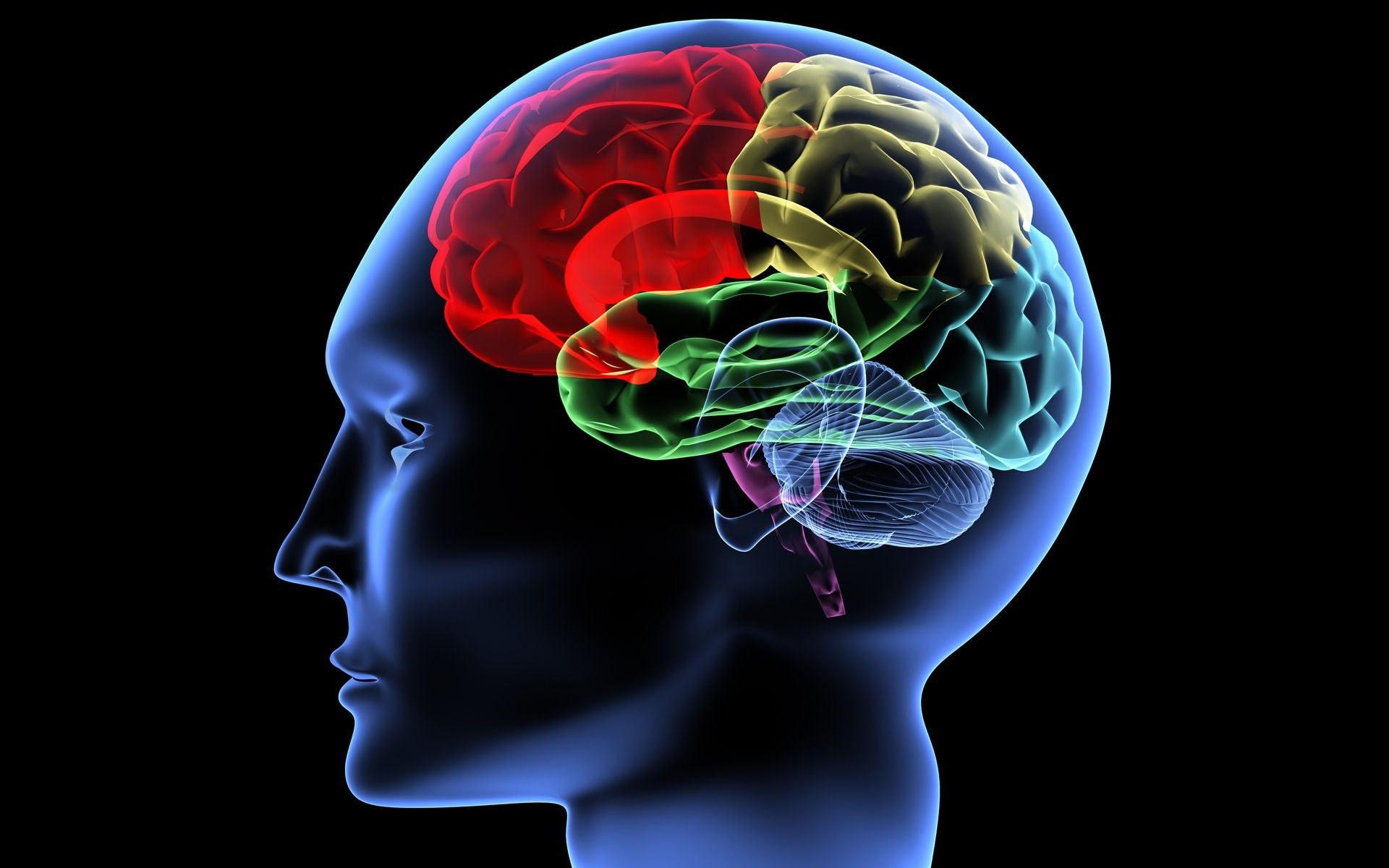 У людей сограниченными возможностями мозг работает по-иному