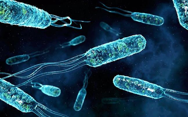 Ученые поведали, какие бактерии попадают ворганизм через пищу