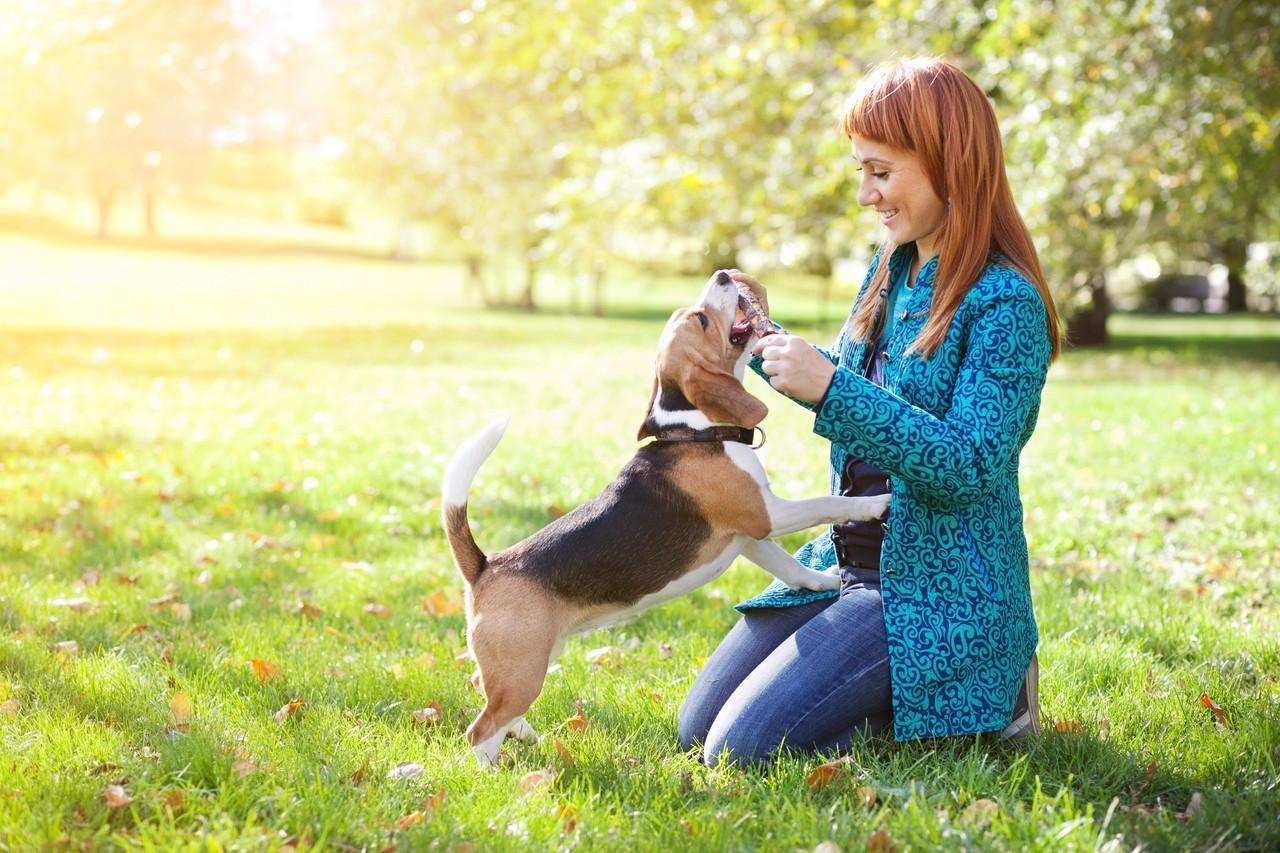 Ученые: Собаки могут читать человеческие мысли