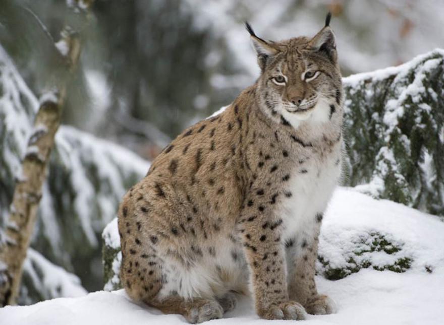 Руководитель Росимущества призвал перестать убивать конфискованных животных