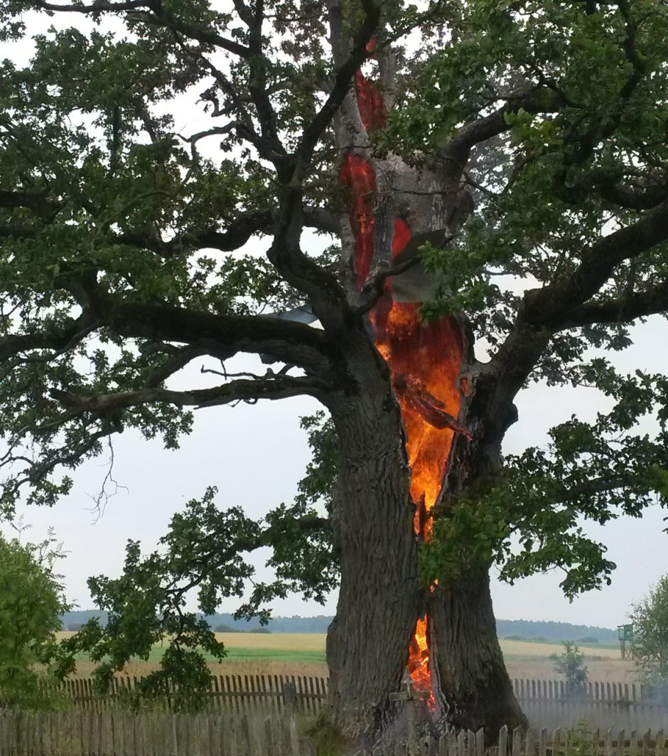 «Портал вМордор» обнаружили всгоревшем дереве