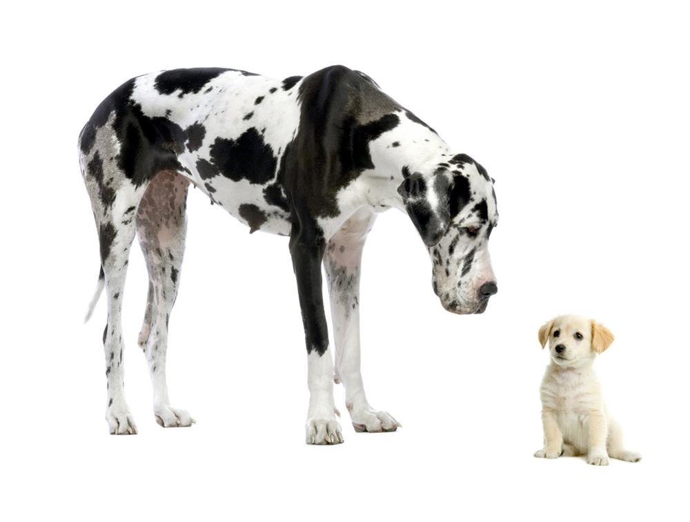 Ученые поведали, как ДНК собаки несомненно поможет влечении людей