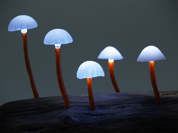 Русские ученые научились растить радужные грибы