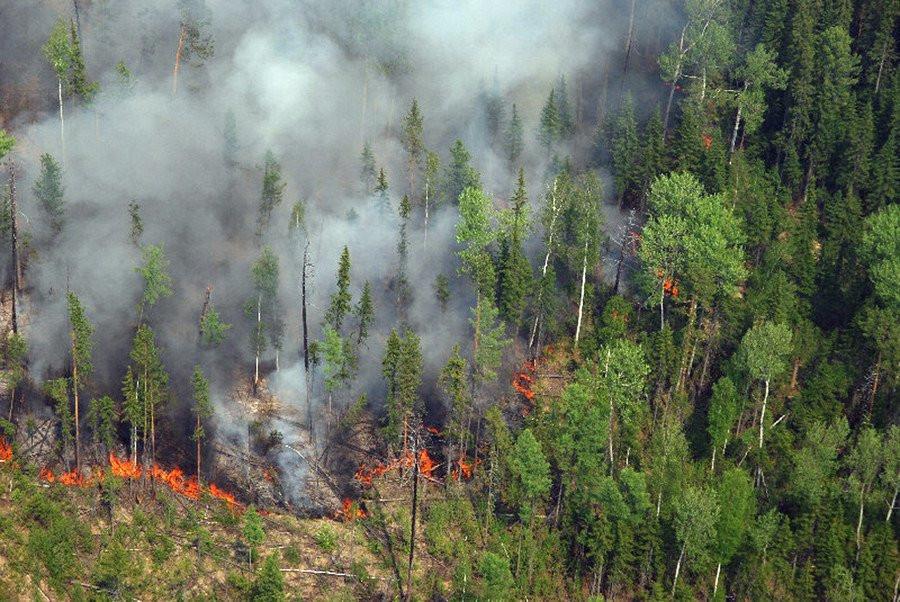 4 пожара из 5-ти потушили влесах Бурятии