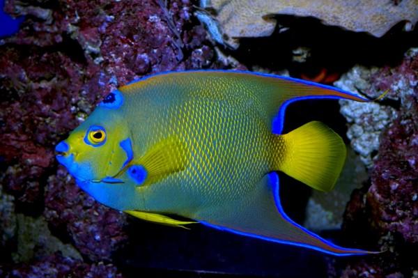 Ученые выявили у рыб способность дружить и чувствовать