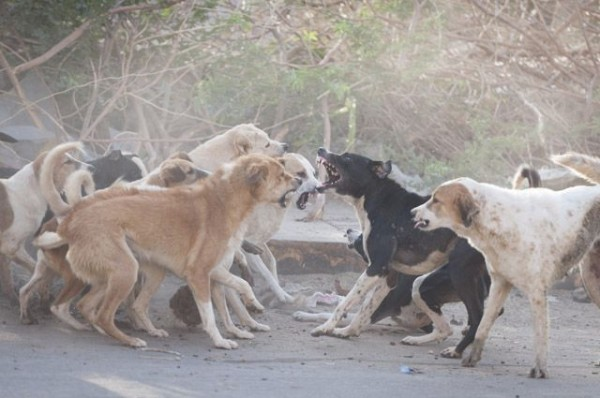 В Нижнем Тагиле стая собак напала на ребенка на детской площадке