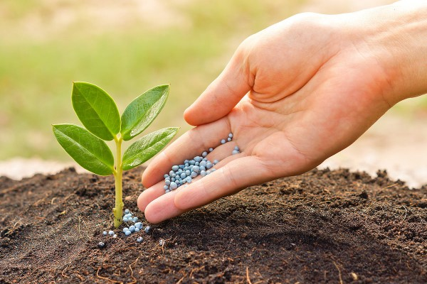 Эксперты: Модифицированные микробы продуцируют удобрения,которые могут накормить бедных