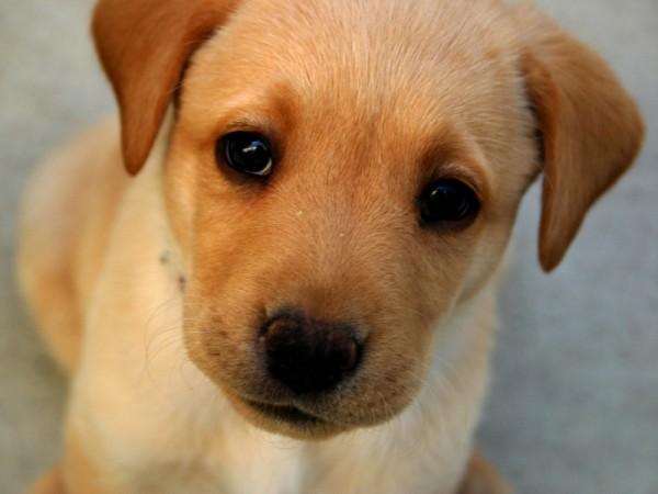 Ученые: Собаки могут отслеживать взгляд людей при поиске пищи