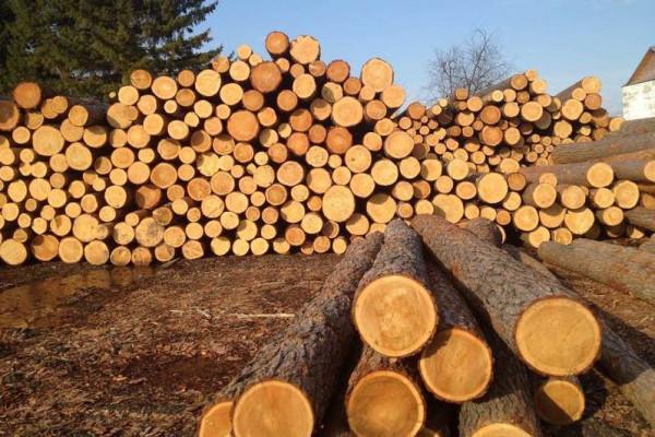 ВЭБ вместе с Красноярским краем построит лесопромышленный комплекс