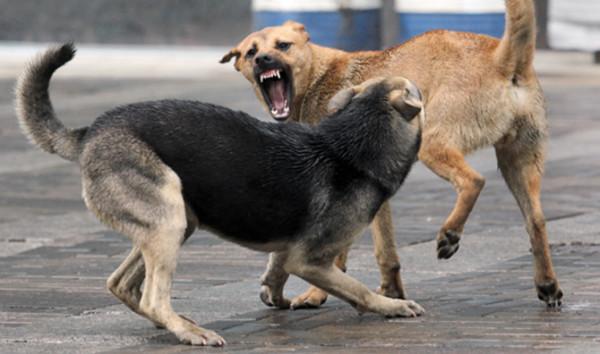 В Ростове стая бродячих собак жестоко искусала женщину