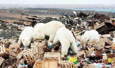В Госдуме не поддержали запрет на захоронение отходов в Арктике
