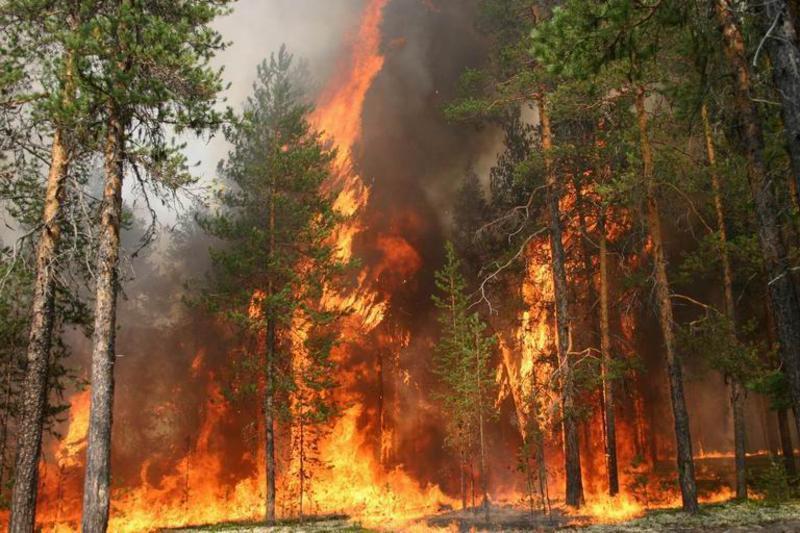 Высокую пожароопасность прогнозируют синоптики в столице на1мая