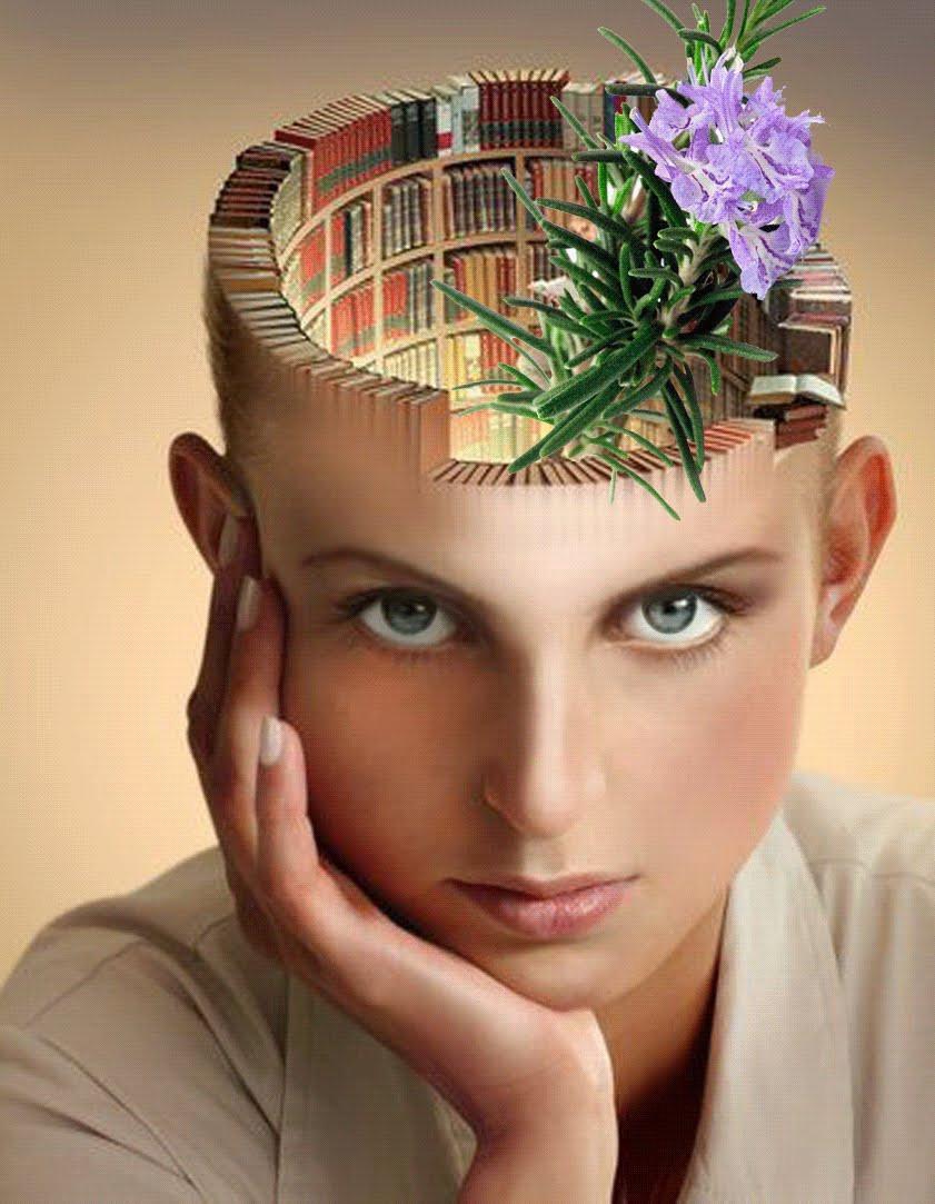 Ученые: запах розмарина улучшает память