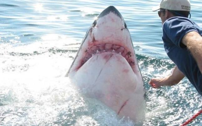 Житель Австралии попал в поликлинику после попытки поймать акулу при помощи лассо