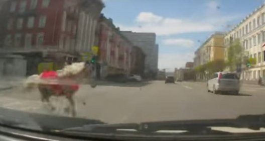 Пони бросилась под колеса вцентре Красноярска