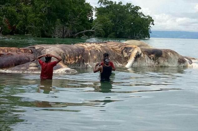 15-метровую тушу неизвестного существа вынесло наберегу Индонезии