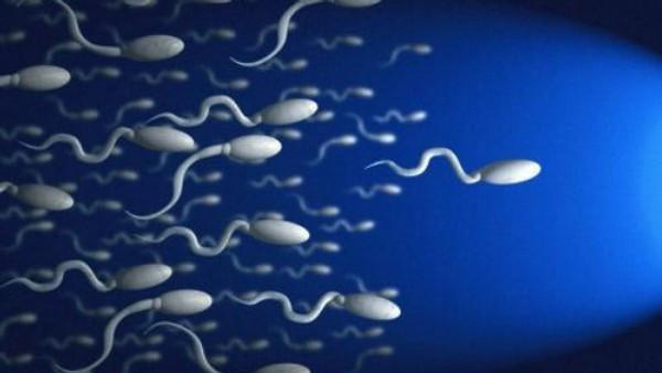 Ученые: накачество спермы умужчин влияет время отхода косну