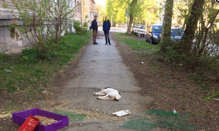 ВЕкатеринбурге мужчина выбросил изокна котят, щенка алабая икролика