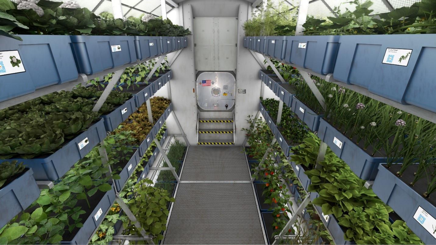 Астронавты собрали урожай капусты, которую вырастили наМКС