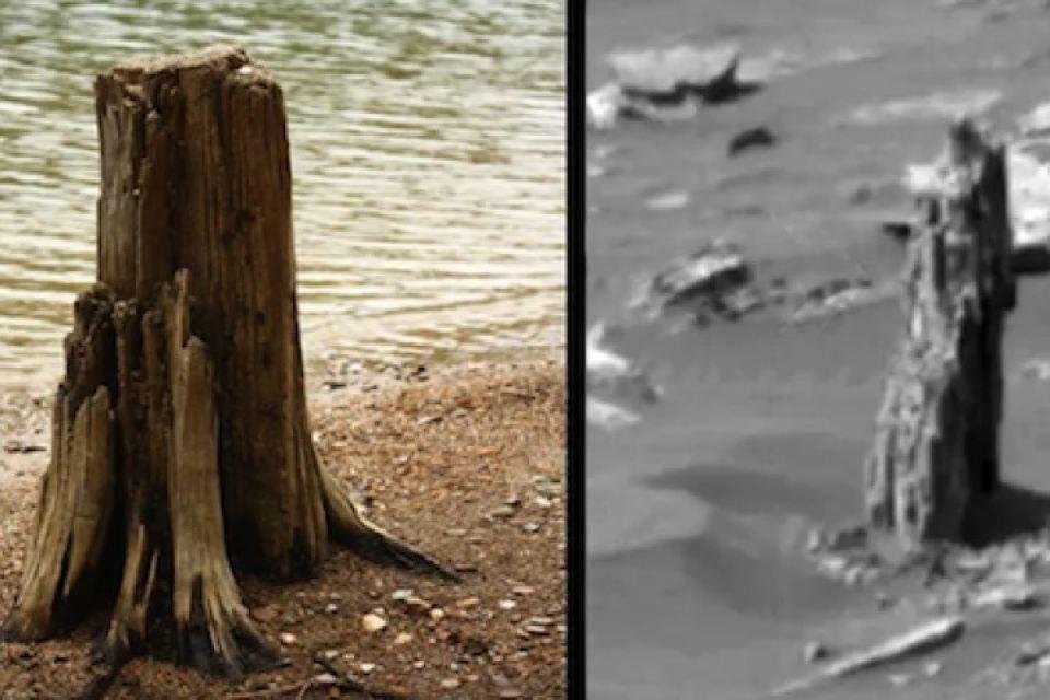 Уфолог отыскал наМарсе окаменевший ствол дерева