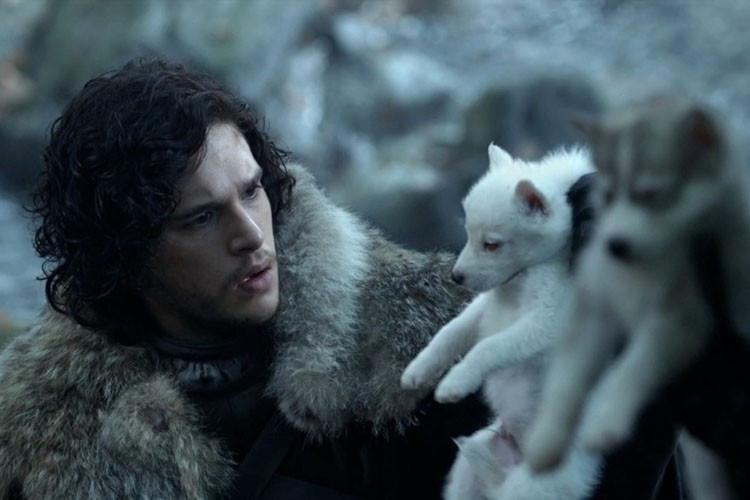 Скончался пёс, сыгравший лютоволка Джона Сноу в телесериале «Игра престолов»