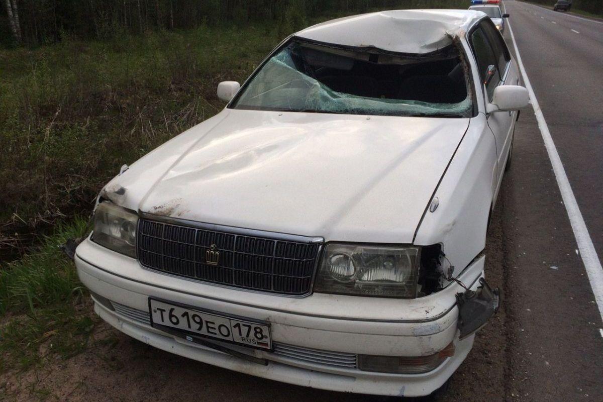 ВТвери натрассе М-10 иностранная машина сбила лося