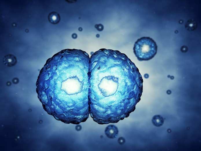 Ученым изКанады удалось обучить клетки крови быстро затягивать раны