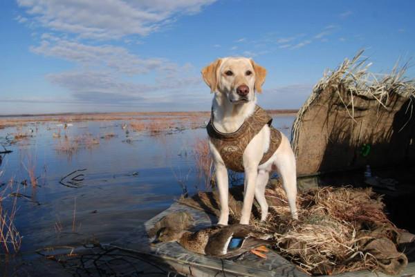 В Тамбове пройдет выставка охотничьих собак