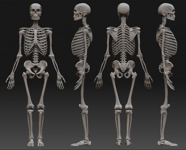 В центре Ростова найден скелет человека