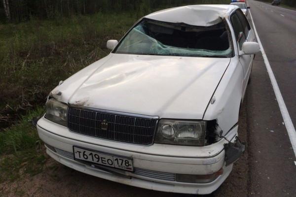 В Тверской области на трассе иномарка сбила взрослого лося