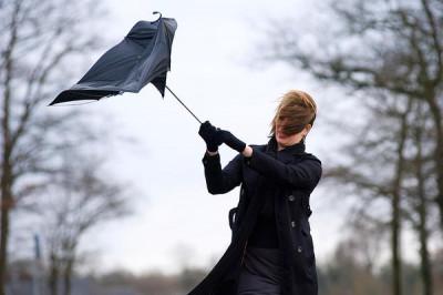 В Калужской области в ближайшие несколько часов ожидается усиление ветра