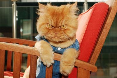 Назван самый сердитый кот в интернете