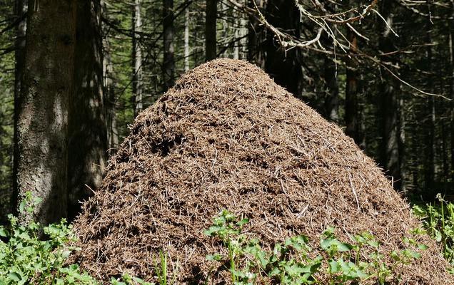 ВПрикамье отшельник утопил грибника и«похоронил» влесном муравейнике