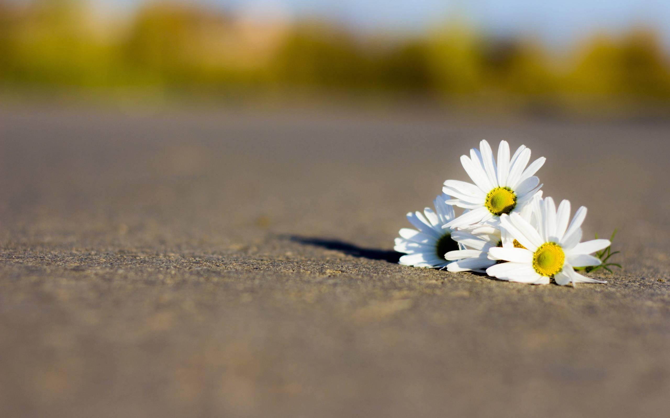 Трое молодых новосибирцев погибли вДТП вДень защиты детей