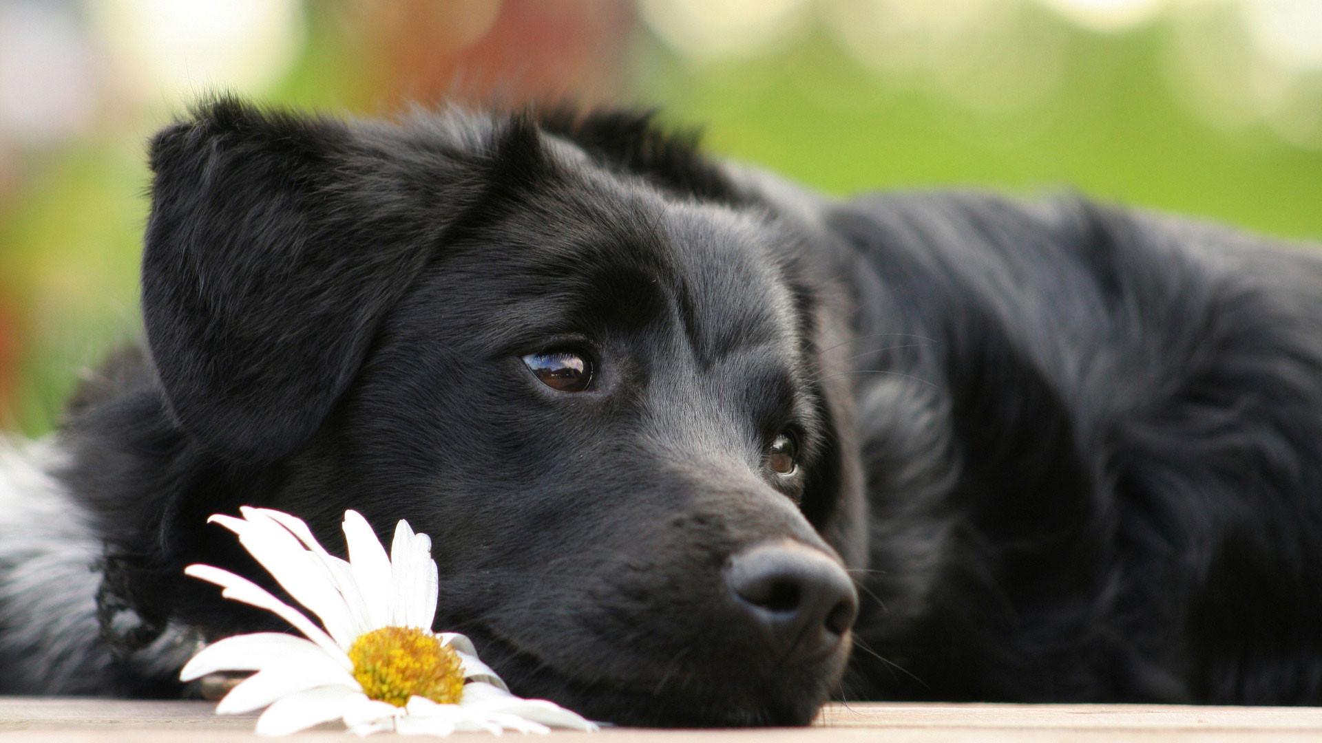 «Живодер» неимеет отношения ксмерти собаки