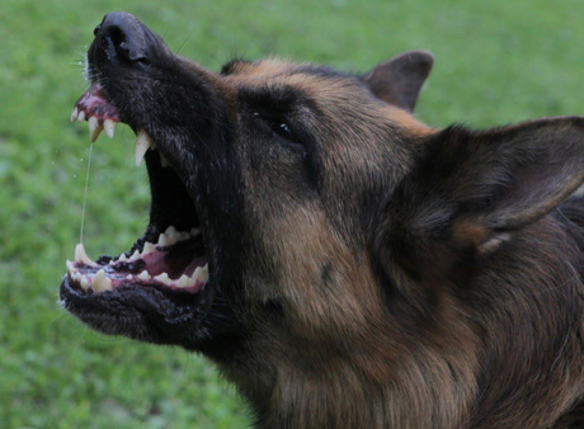 ВИркутске хозяин агрессивной собаки, напавшей надевочку, выплатит штраф