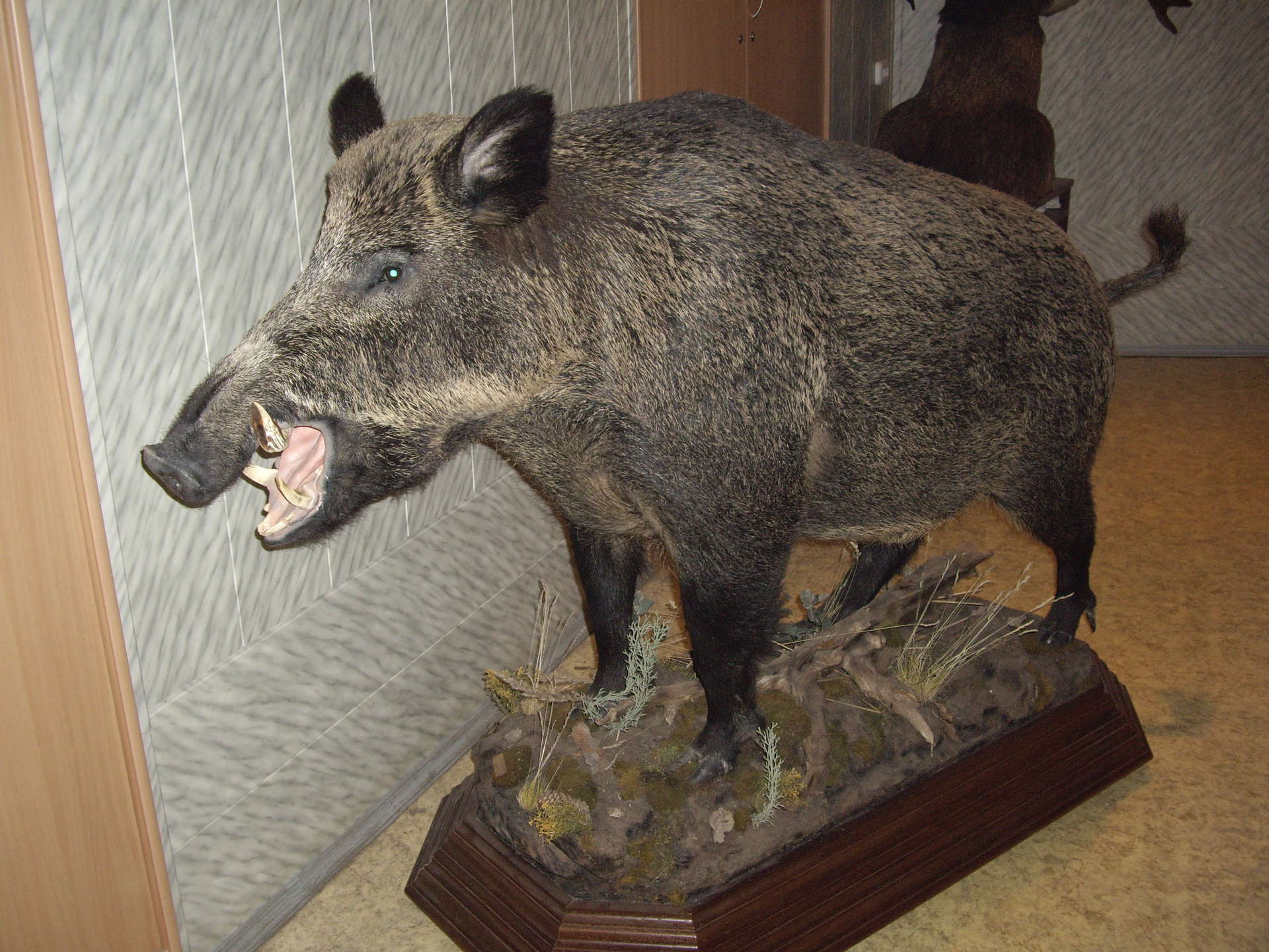 Граждане Ржева пытались реализовать украденные умосквичи шкуры ичучела животных