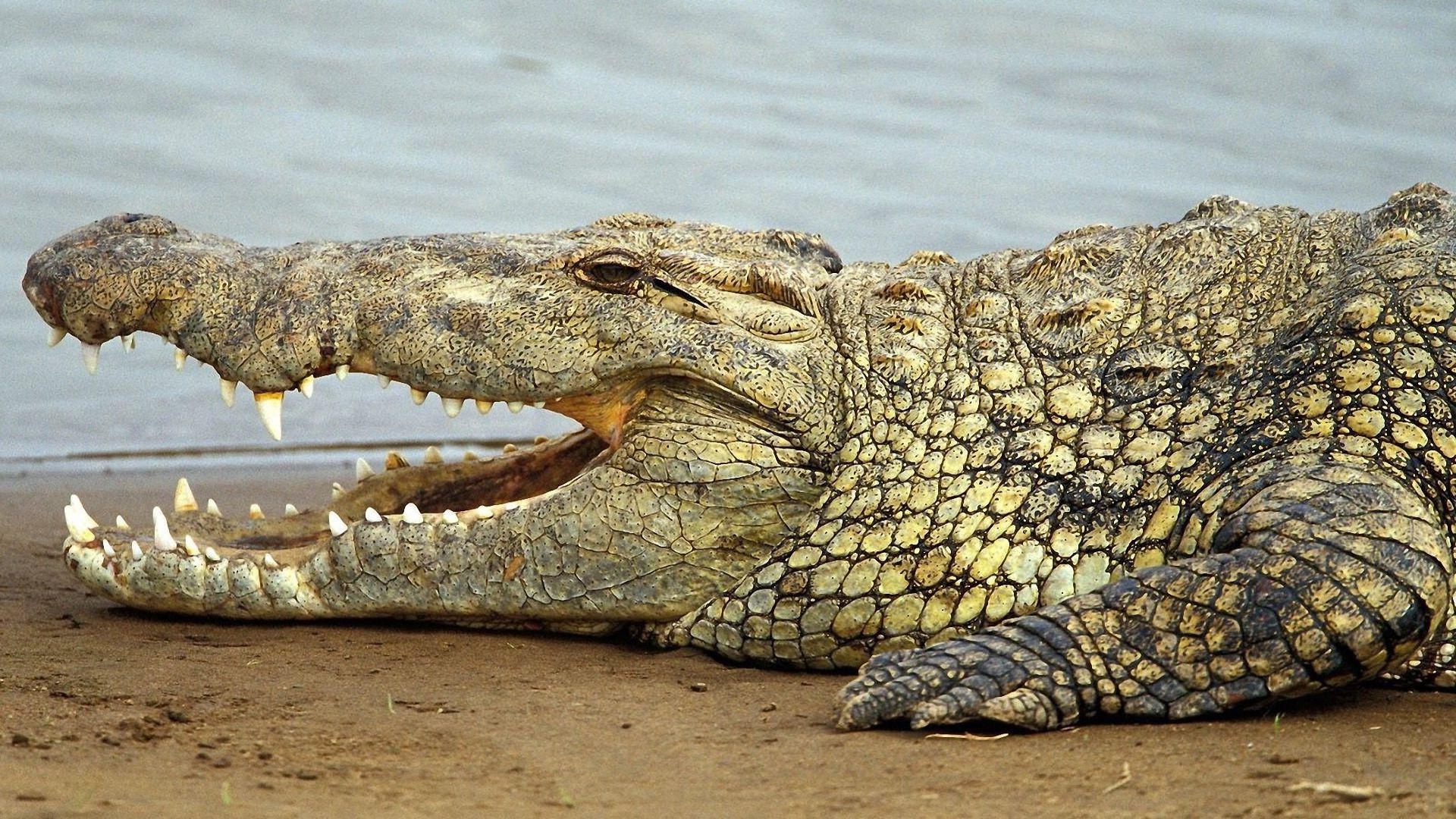 Ученые отыскали останки 6-метрового крокодила-людоеда
