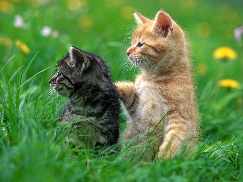 Ученые узнали, зачем убивали кошек вСредние века