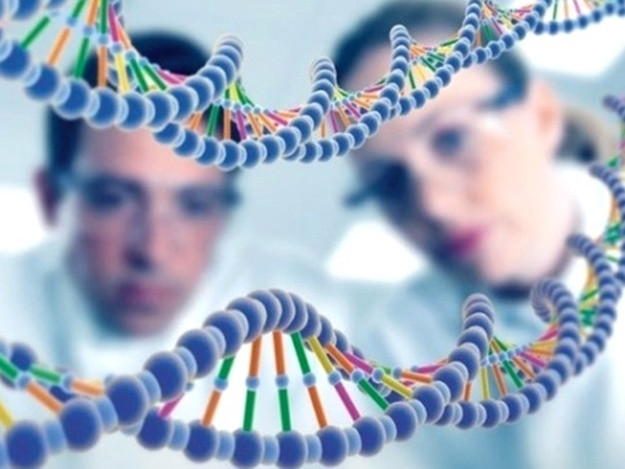 Биологи впервый раз  сняли навидео процесс удвоения структуры ДНК