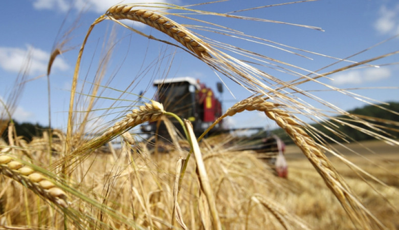 Российская Федерация увеличила экспорт пшеницы на9%