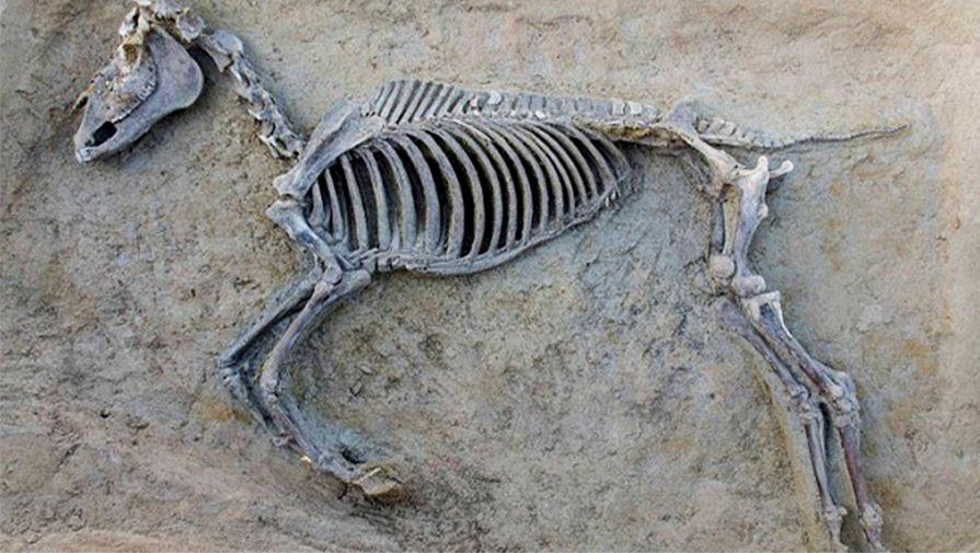 Средневековое захоронение чжурчжэней найдено наюге Приморья