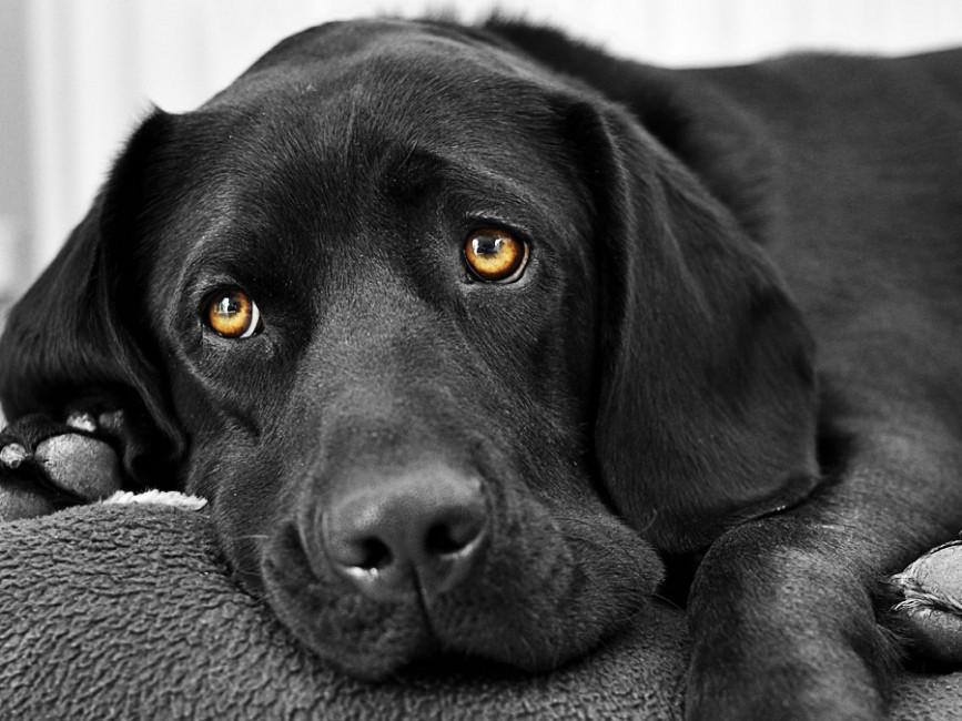 Ученые открыли тайну наклона головы собаки