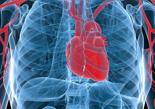 Ученые узнали , можетли рак поразить сердце человека