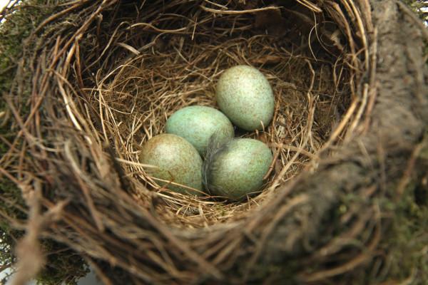 Ученые назвали факторы, от которых зависит форма яйца и размера птицы
