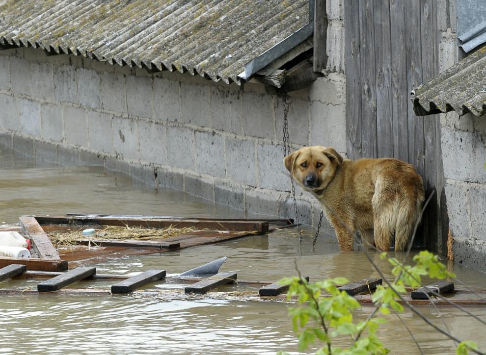 Размытые дороги вНовгородской области восстановят после схода воды