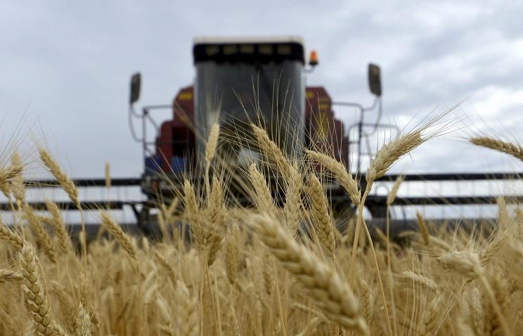 Ткачев: РФ в2016—2017 сельхозгоду экспортировала 35,5 млн тонн зерна